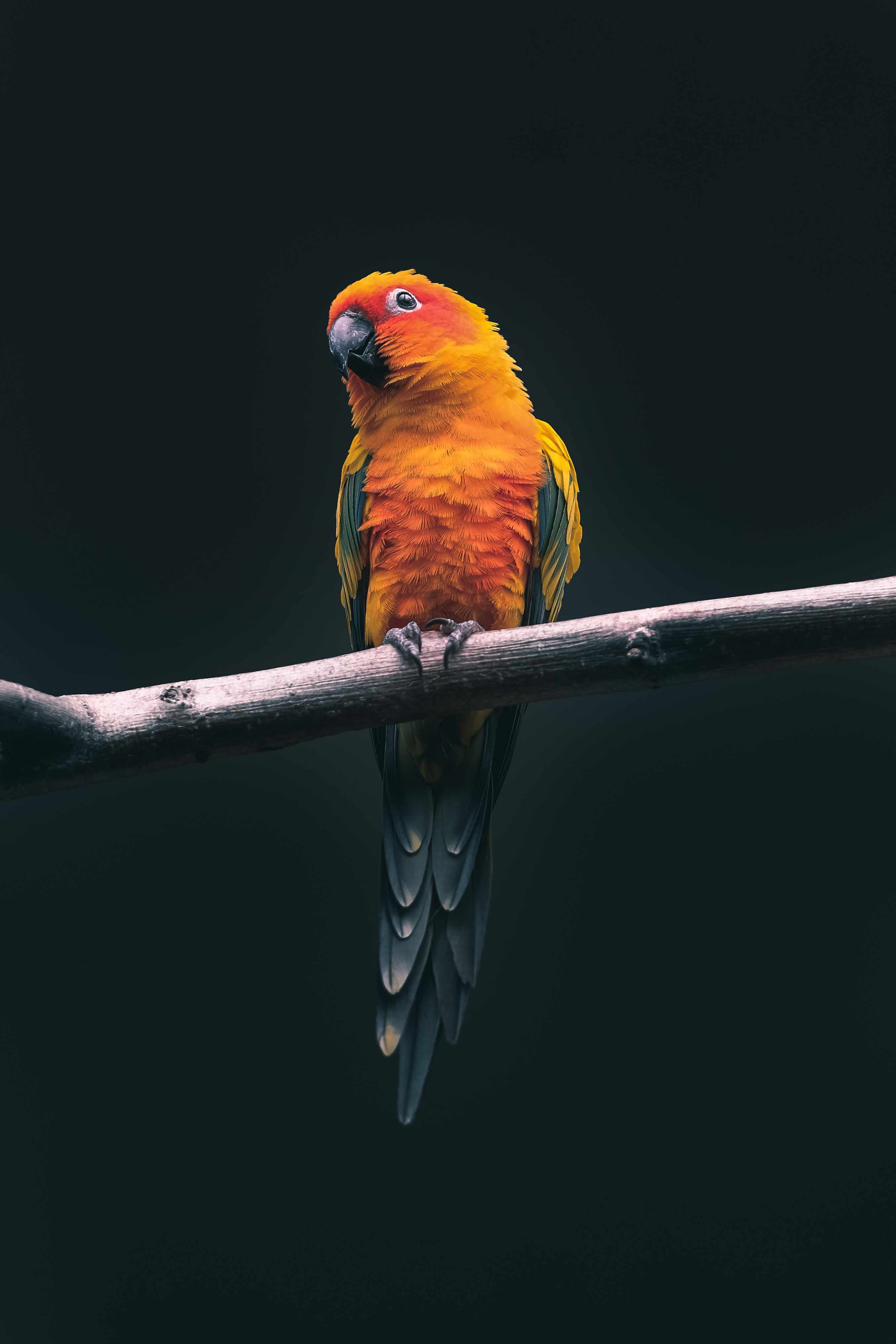 A colourful parrot sitting on a branch