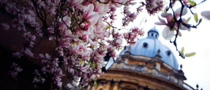 Radcliffe camera with blossom